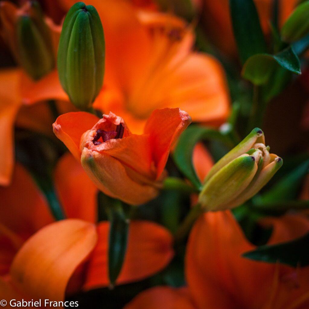 Reportaje Tienda de Flores